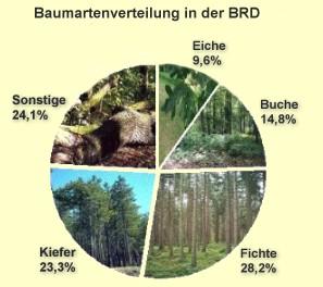 baumarten Zweite Goldmünze deutscher Wald   Buche